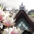 ikona_atelier-magnolia.jpg