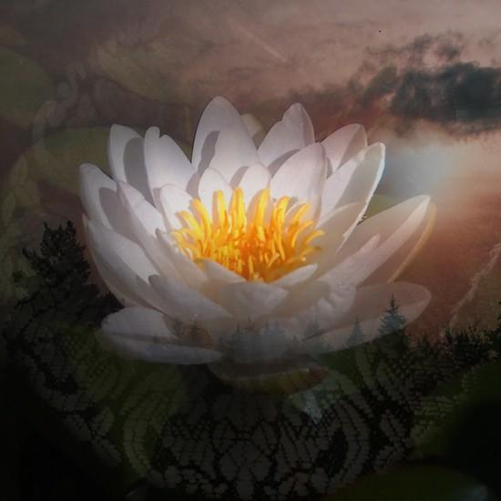 Vytvořte harmonii a rovnováhu ve svém Životě!