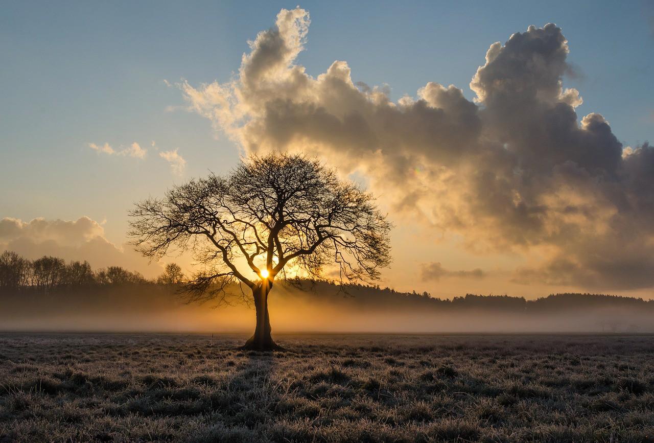 lone-tree-1934897_1280.jpg